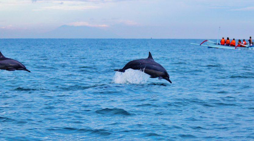 Paket Tour Dolphin 2 hari 1 malam