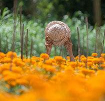 Ladang Bunga Kemitir