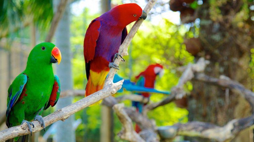 wisata keluarga Bali Bird Park