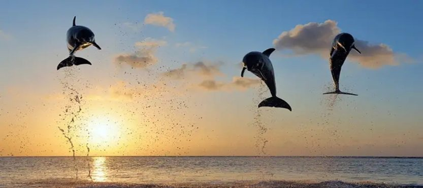 Paket Tour Bali 4 Hari 3 Malam Dolphin