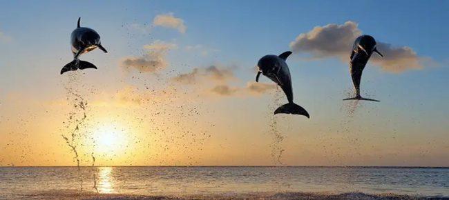 Paket Tour 4 Hari 3 Malam Dolphin