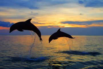 Paket Tour Dolphin Lovina