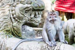 Paket Tour 6 Hari di Bali